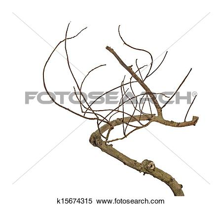 Stock Image of Dry branch k15674315.