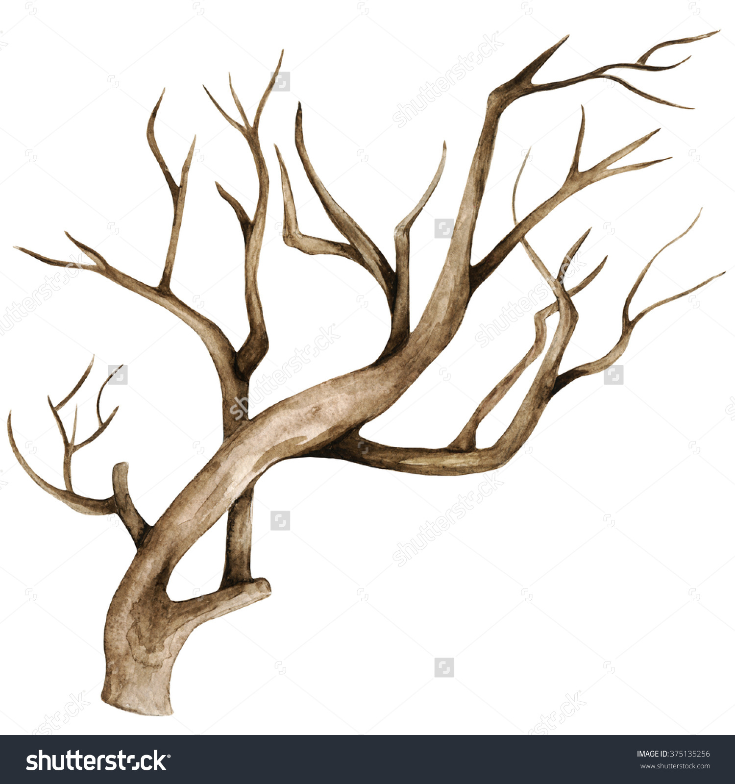 Watercolor Dry Tree Branch Bare Tree Stock Illustration 375135256.
