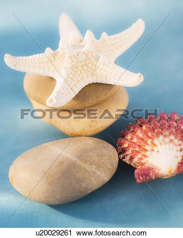 Stock Photography of Composition of dry starfish, sea shell and.