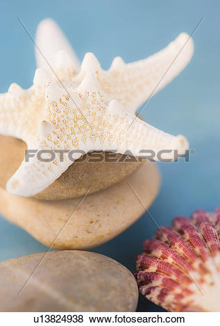 Pictures of Composition of dry starfish, sea shell and pebble on.