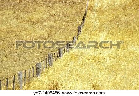 Stock Images of Paddocks in dry grass country divided by a fence.