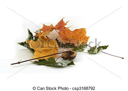 Stock Photo of Dry fall leaves.