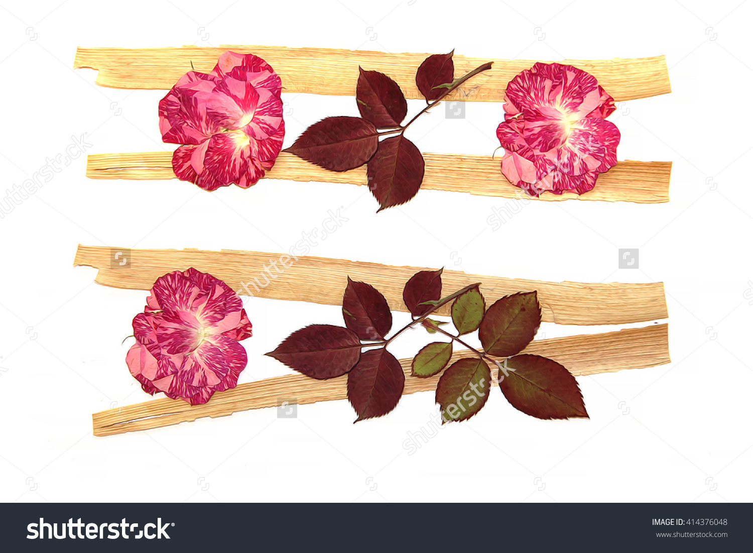 Oil Draw Rose, Draw Of Dry Fall Dry Flowers Oil Paint Isolated.