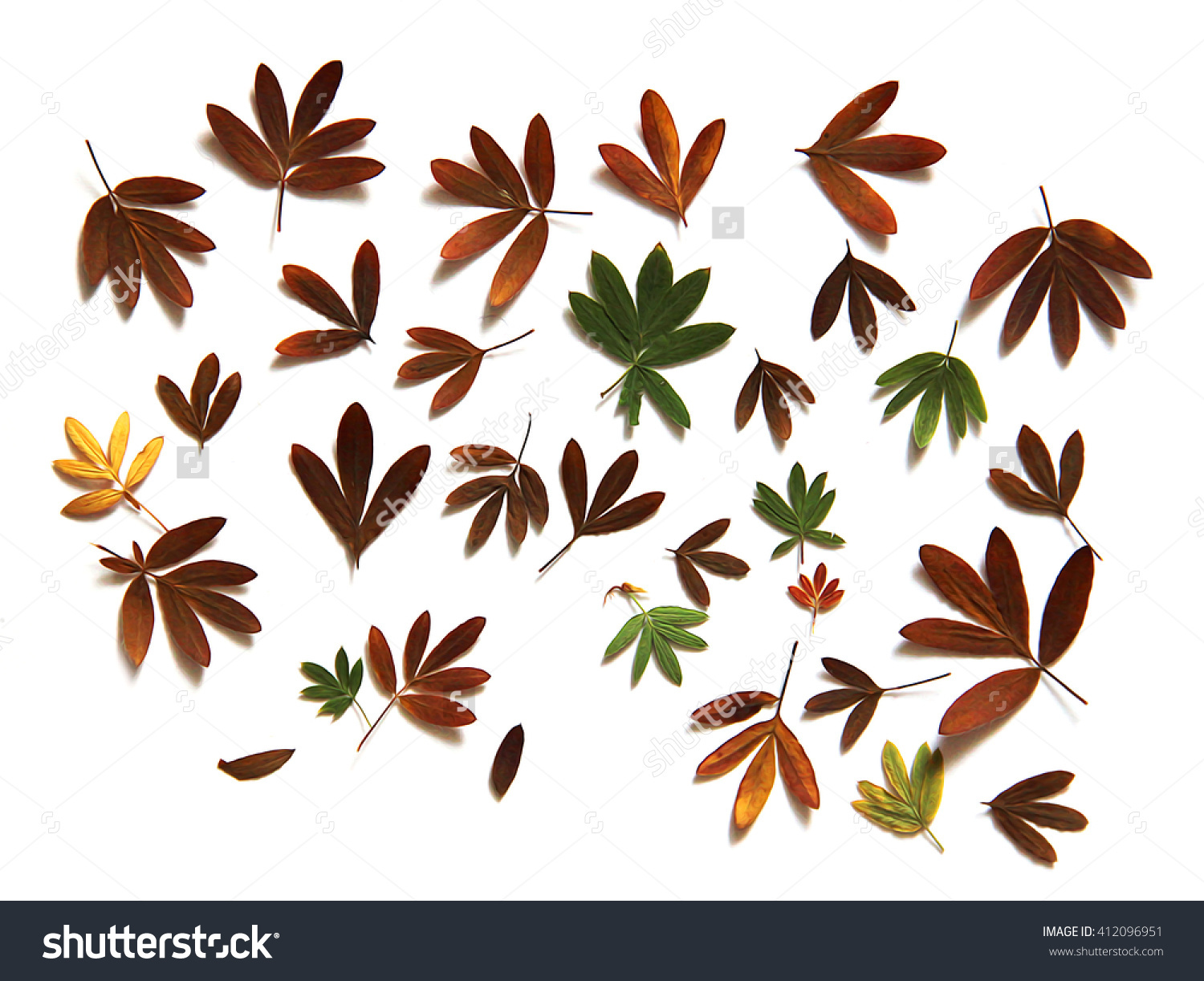 Oil Paint Dry Fall Leaf Kuril Stock Illustration 412096951.