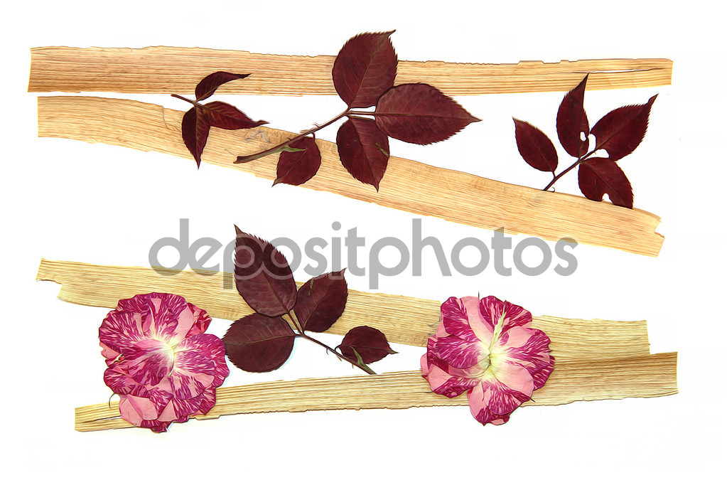 Oil draw rose, draw of dry fall dry fowers oil paint isolated.