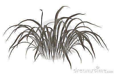 Dry Grass Clip Art.