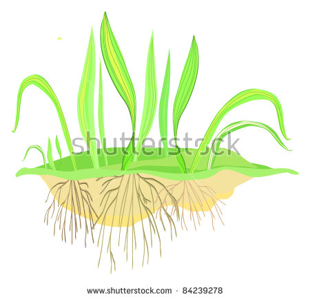 Grass Roots Isolated Stock Photos, Royalty.