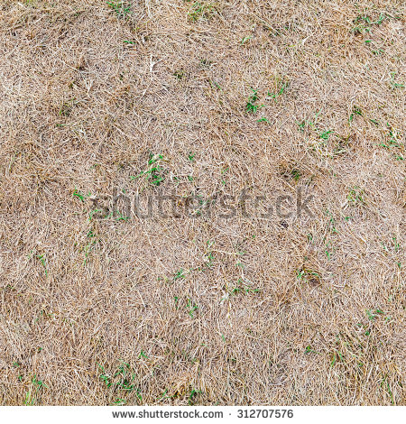 Grass Texture Seamless Stock Images, Royalty.
