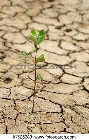 Stock Photo of Plant growing in a crack on dry ground k7526383.