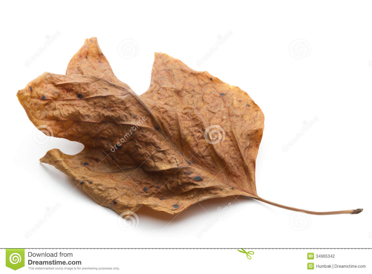 Dry Leaf Stock Photography.