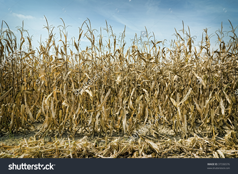 Dry Season Clipart Clipground