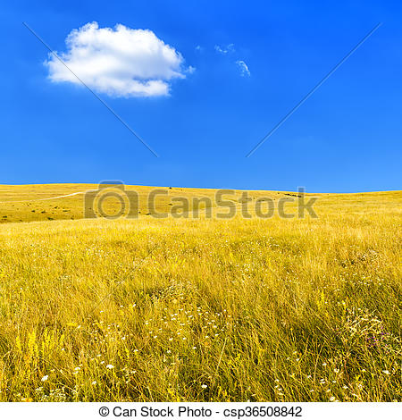 Stock Photo of Steppe with dry grass.