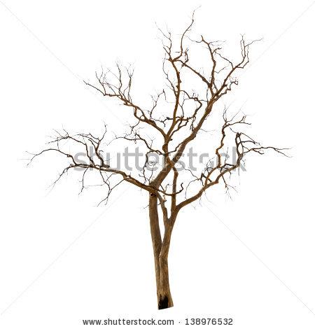 Dead Tree Stock Photos, Royalty.