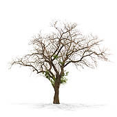 Dead tree Illustrations and Clipart. 1,104 dead tree royalty free.