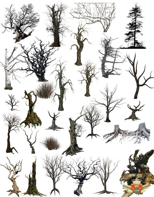 dry trees psd clipart for Photoshop.