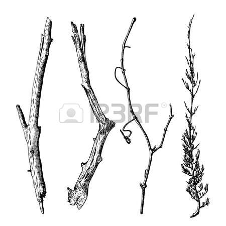 1,251 Dry Twigs Cliparts, Stock Vector And Royalty Free Dry Twigs.