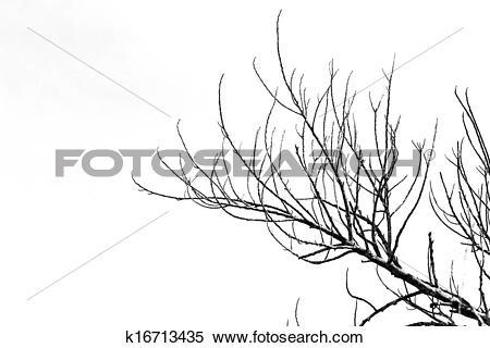 Stock Image of Dry twigs. k16713435.
