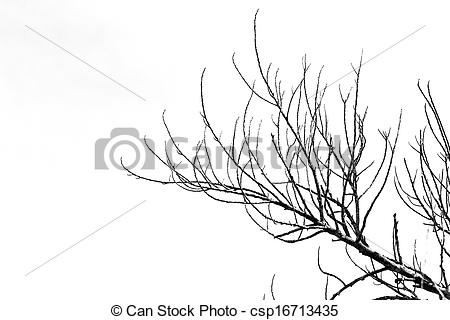 Stock Photos of Dry twigs..