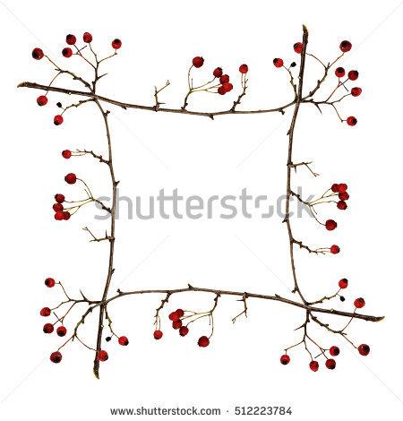 A Broken Twig Stock Photos, Royalty.