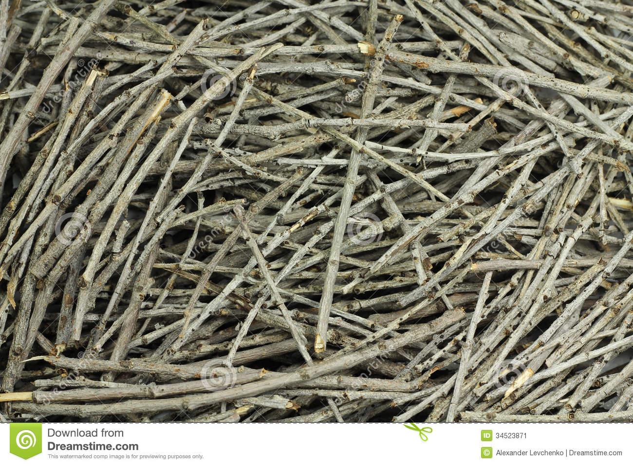 Dry Twigs Stock Image.