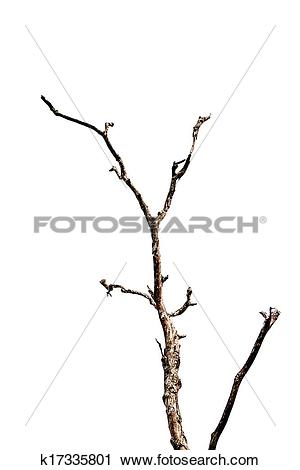 Stock Photography of Dry twigs. k17335801.