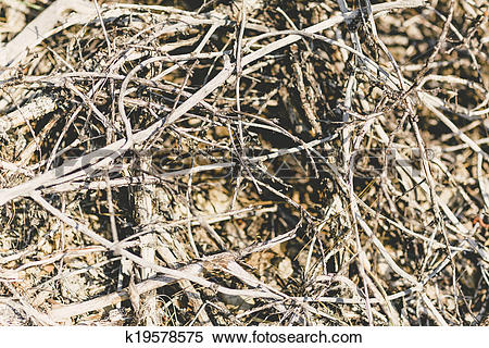 Stock Image of pile of dry twigs k19578575.