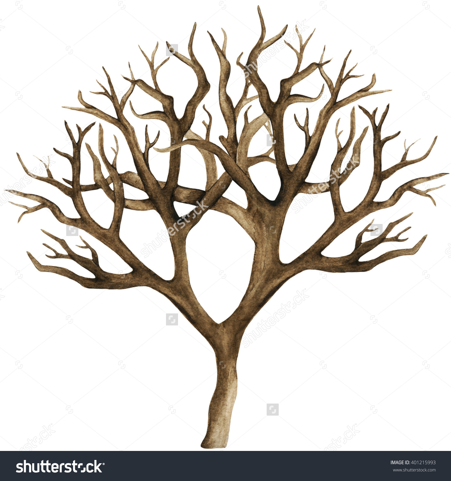 Watercolor Dry Tree Bare Tree Branch Stock Illustration 401215993.