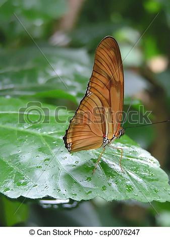 Picture of Julia Butterfly.