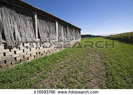 Stock Images of A drying shed on a tobacco field in the town of.