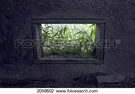 Stock Photo of Long Grass Seen Through An Open Window In A Tobacco.