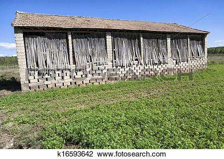 Stock Photo of A drying shed on a tobacco field in the town of.