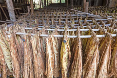A Drying Shed On A Tobacco Field In The Town Of Cijuela Royalty.