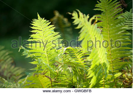 Affinis Stock Photos & Affinis Stock Images.