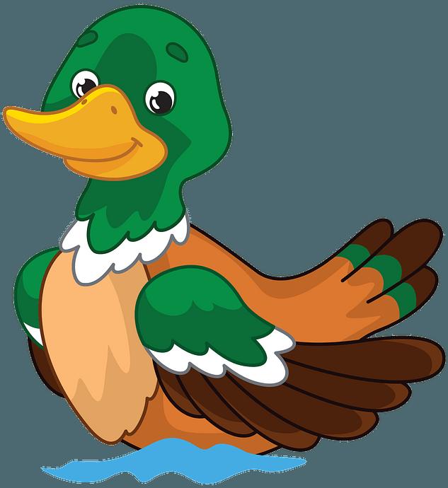 Mallard Duck clipart. Free download..