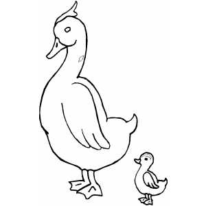 Duck And Duckling Coloring Page.