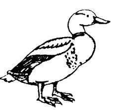 Duck Art Activities.