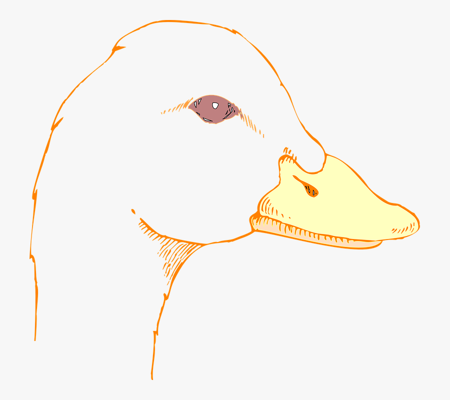 Duck Head Png.