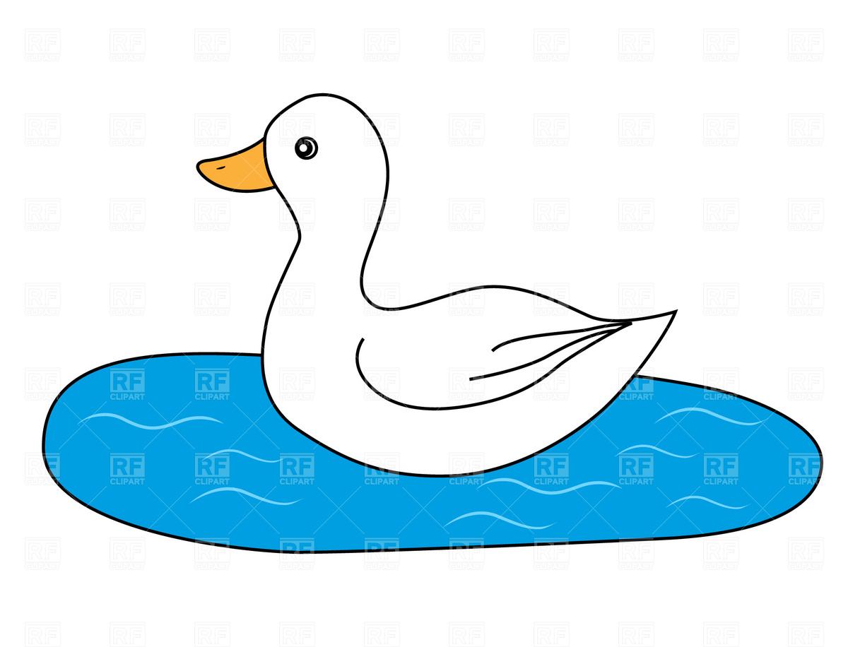 White duck Stock Vector Image.