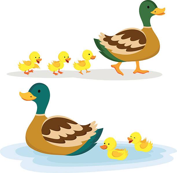 Best Duck Illustrations, Royalty.