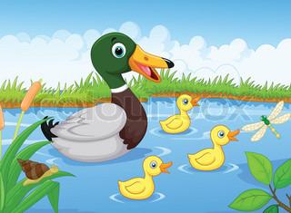 Little ducks following the mother duck.