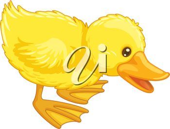 Picture of a Cute Fuzzy Back Duck In a Vector Clip Art.