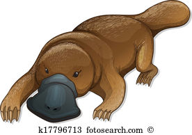Duck billed platypus Clipart and Illustration. 35 duck billed.