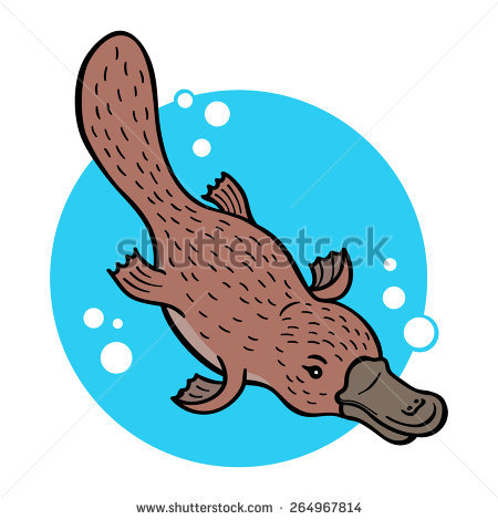 Platypus Stock Photos, Royalty.