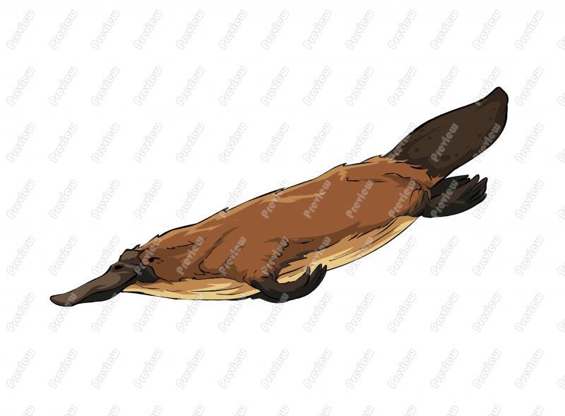 Duckbill Platypus Character Clip Art.