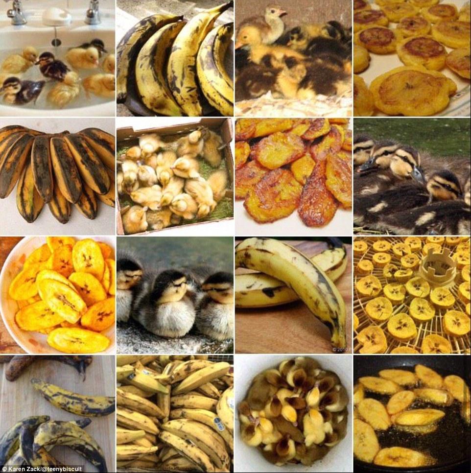 Karen Zack's images reveal similarities between dogs and food.