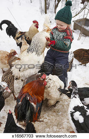 Stock Photo of Young boy feeding chicken and ducks in winter.