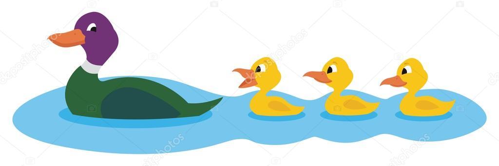 Ducks Swimming — Stock Vector © Malchev #6530125.