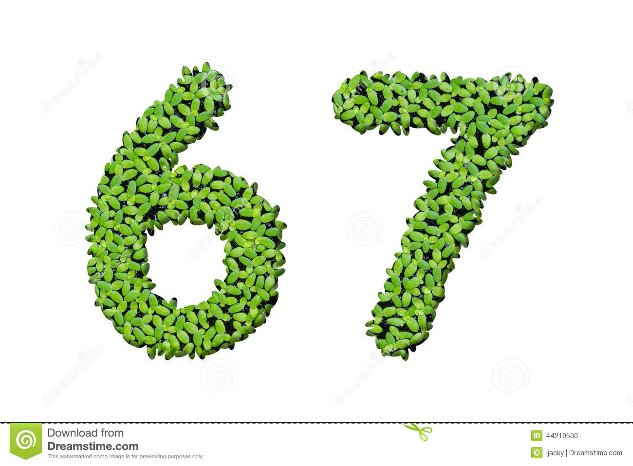 Gallery For > Duckweed Clipart.