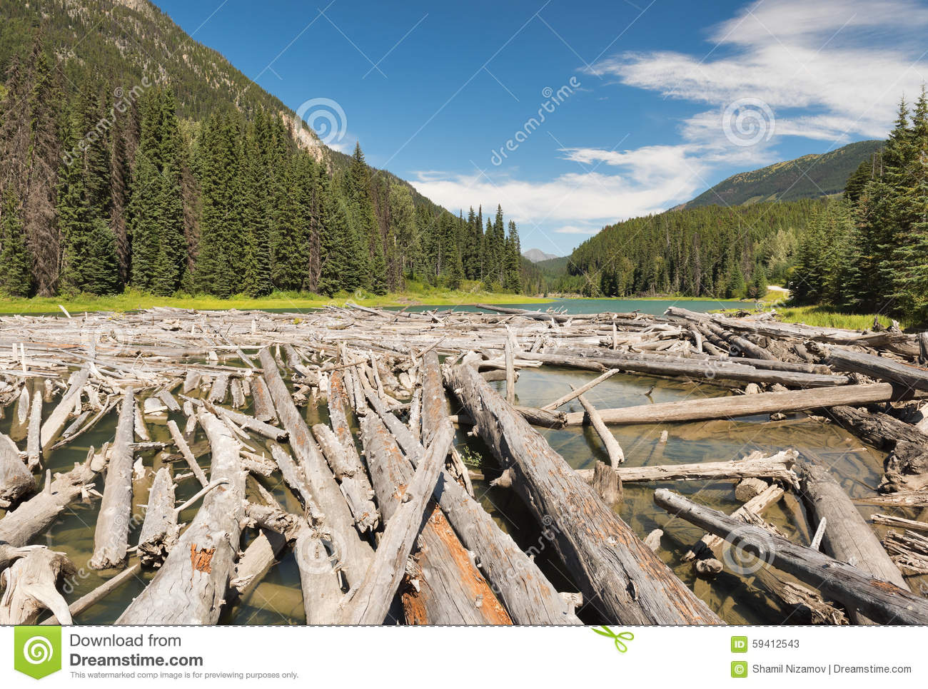Lake Littered With Logs Stock Photo.