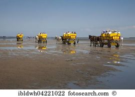 Mudflat carriage Images and Stock Photos. 12 mudflat carriage.
